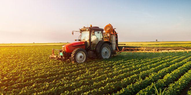 Tortorella, imprese agricole. Locali comunali a prezzo stracciato